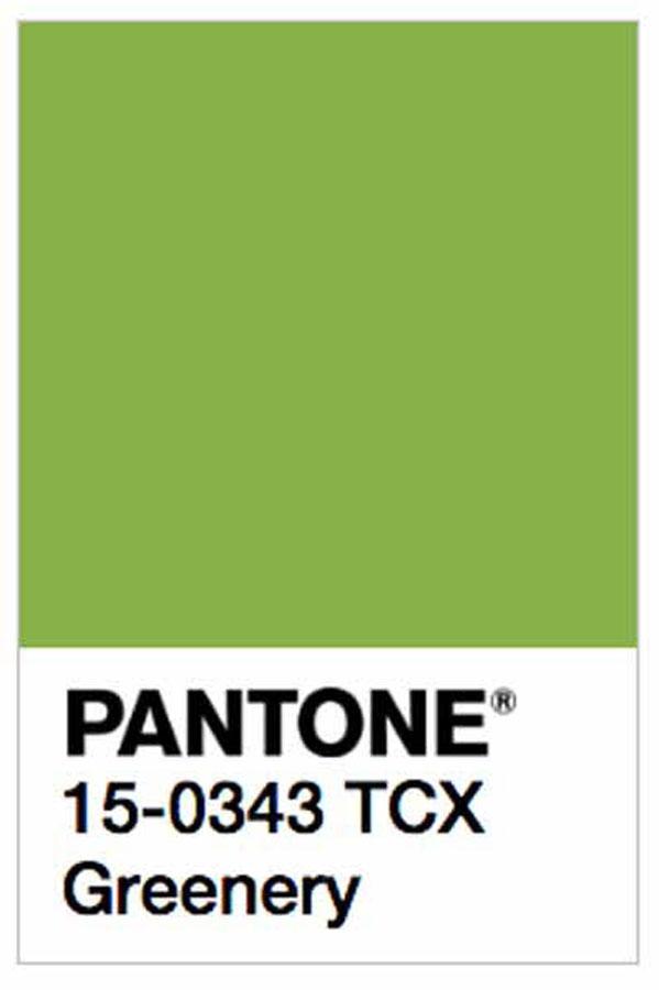 Pantone elegge il colore dell'anno 2017: PANTONE 15-0343 Greenery 2