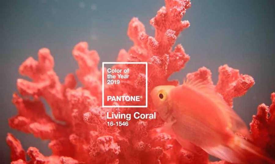 Living Coral sarà il colore Pantone dell'anno 2019 0